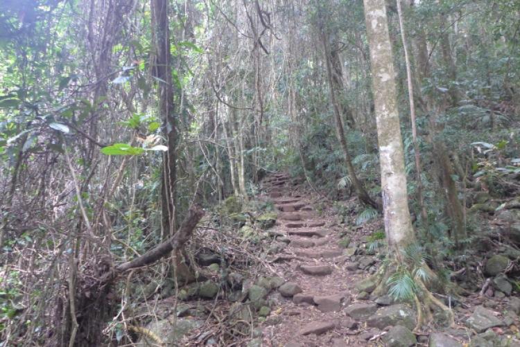 Walking tracks mount warning