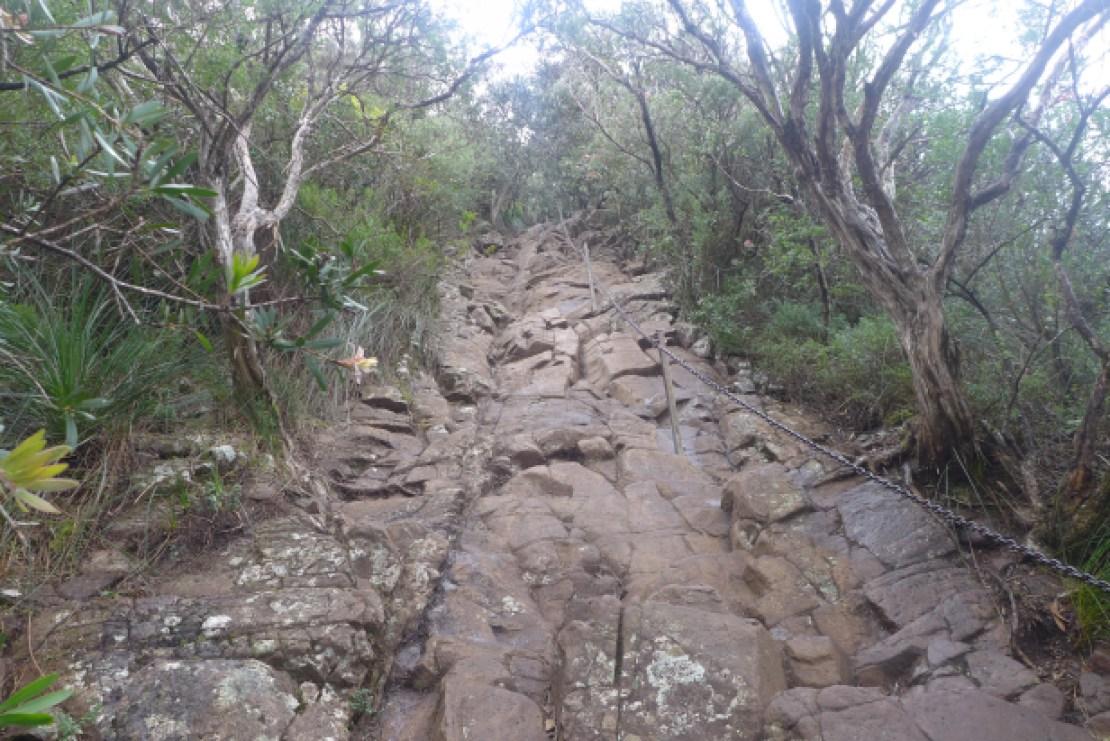 summit climb mount warning