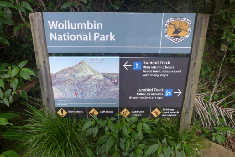 Summit track Mount Warning